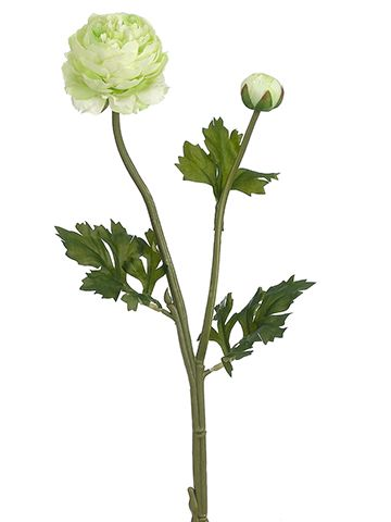this pretty lime green ranunculus spray is the perfect spring color to complement your wedding designs
