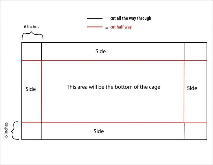 How to Build a C Guinea Pig Cage