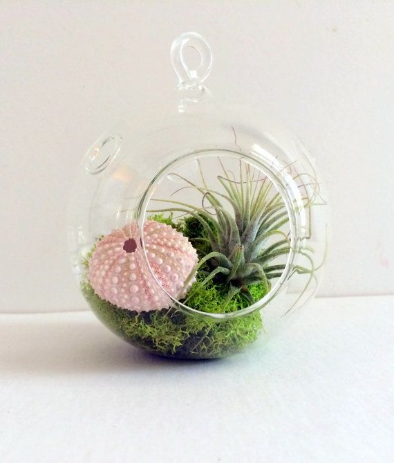 Orb Air Plant Hanging Terrarium Clear Glass Orb By