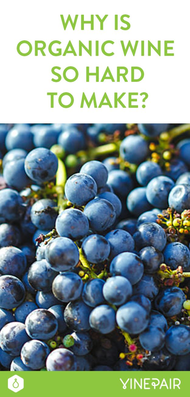 Why Is Organic Wine So Hard to Make?
