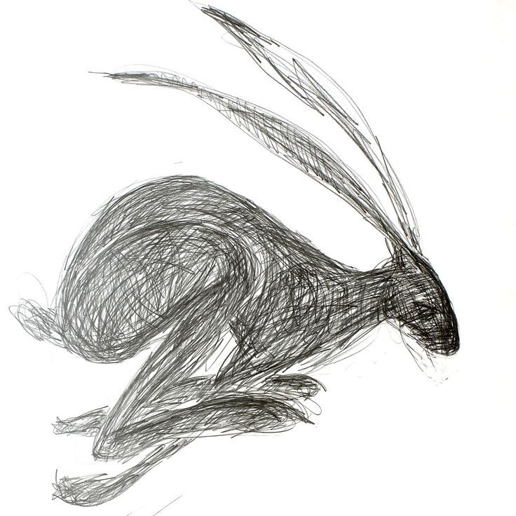 hare line drawing - Google Search. Jack Rabbit.
