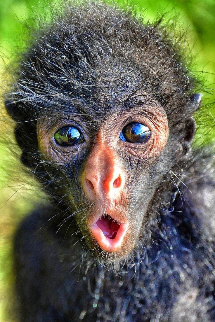 Картинка прикольная обезьяна