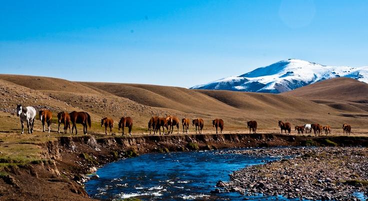 Outback in Kazakhstan