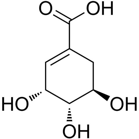 Shikimic acid, more commonly known as its anionic form shikimate, is a cyclohexene, a cyclitol and a cyclohexanecarboxylic acid. It is an important biochemical metabolite in plants and microorganisms. Its name comes from the Japanese flower shikimi (シキミ, the Japanese star anise, Illicium anisatum), from which it was first isolated in 1885 by Johan Fredrik Eykman.[1] The elucidation of its structure was made nearly 50 years later.[2]