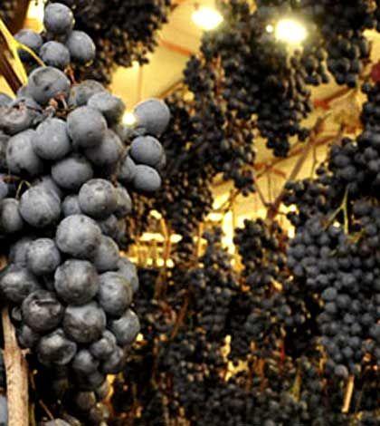 Inviti di-Vini: novembre 2013 | 15 manifestazioni consigliate in Italia tra vino nuovo e tipicità