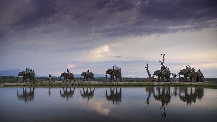 Sunset with elephants at Camp Jabulani