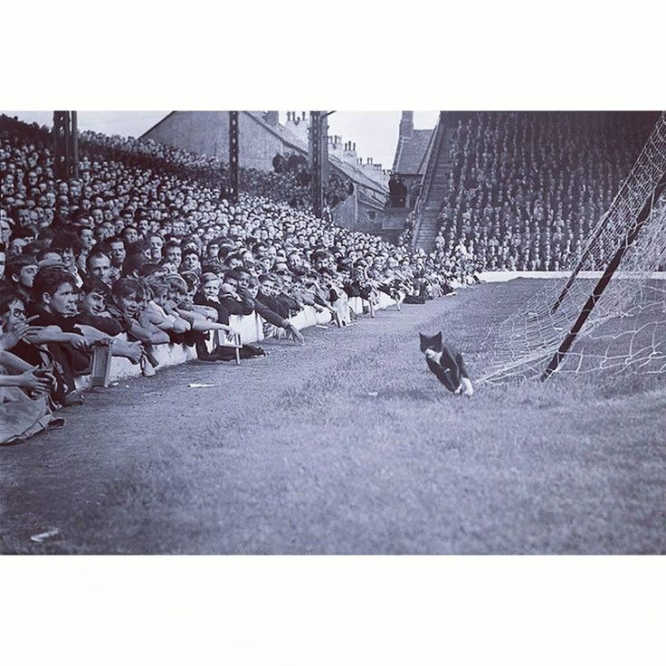 They say Black Cats are bad luck? This is the Cat that ran in front of the Kop on 1964 during Liverpool's 3-2 win over Arsenal. They won the FA cup that year... but united did win the league!   : @liverpoolfc / @arsenal  #liverpoolfc #liverpool #lfc #anfield #thekop #kop #arsenal #arsenalfc #afc #footballleague #cat #blackcat #friday13th #badluck #football #soccer #futbol #futebol #calcio #soccerstyle #footballfashion #kitcouture #footballculture #FlatBackFour