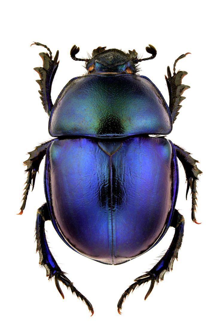 Dung beetle// http://www.bykoket.com/inspirations/category/fauna-and-flora