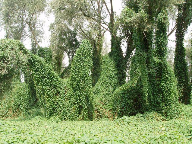 -piante epifite -che crescono su altre Cerca con Google