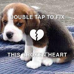 Fix the broken heart.. . #dog #puppy #heart #igers
