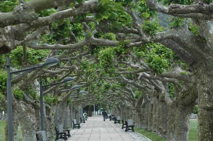 Antiguamente la entrada al Monasterio de Valdedios era asi de hermosa Asturiasven Guardianes del Paraiso