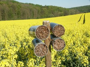 how to make a native bee hotel