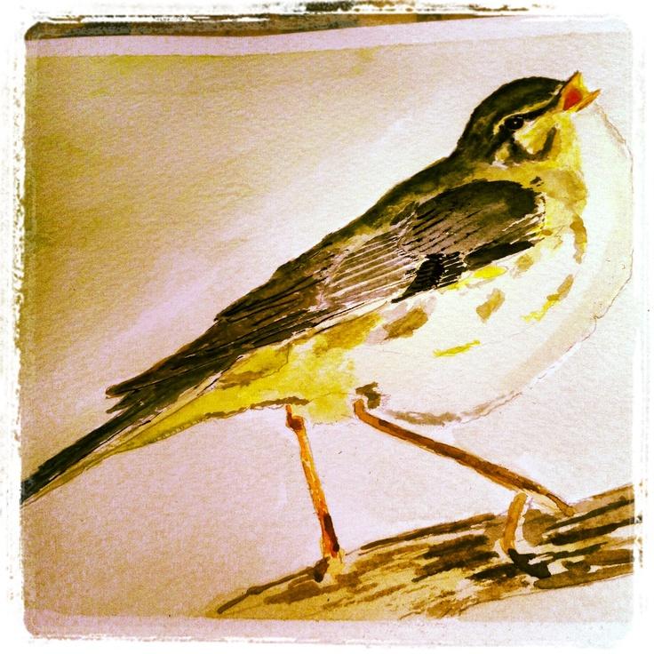 Pájaro 1