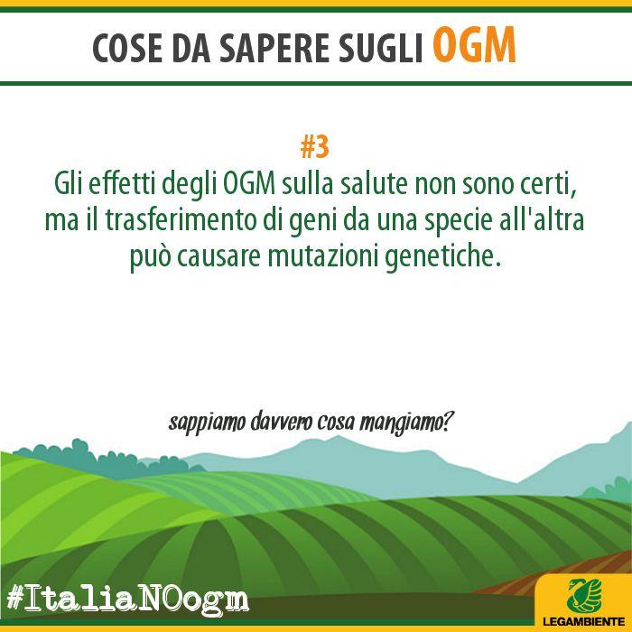 OGM Info/3 www.legambiente.it/italia-NO-ogm #ItaliaNOogm