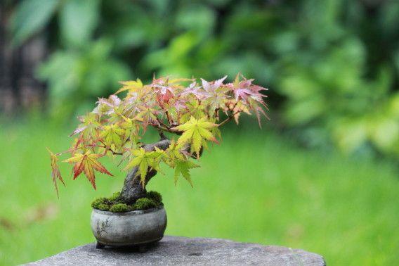 『盆栽・水石・山草フェア』