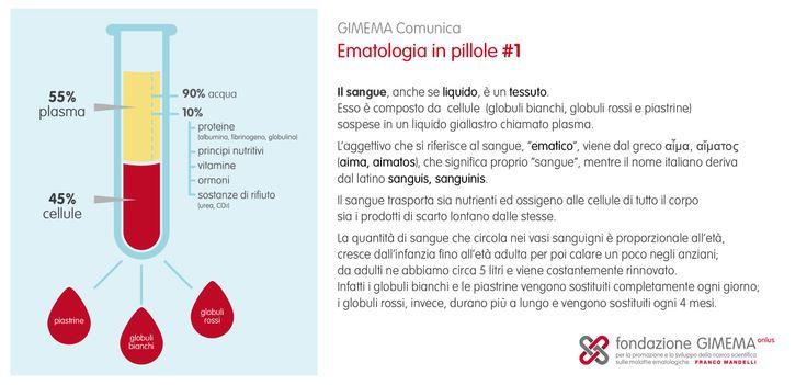Ematologia in pillole #1: Composizione del sangue  Fondazione GIMEMA Onlus
