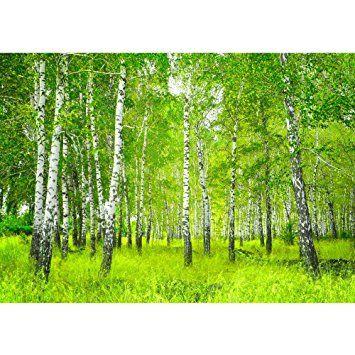 Vlies Fototapete PREMIUM PLUS Wand Foto Tapete Wand Bild Vliestapete - SUNNY BIRCH FOREST - Birkenwald Bäume Wald Sonne Birkenhain Birke Birken Gras Natur Baum - no. 112, Größe:350x245cm Vlies