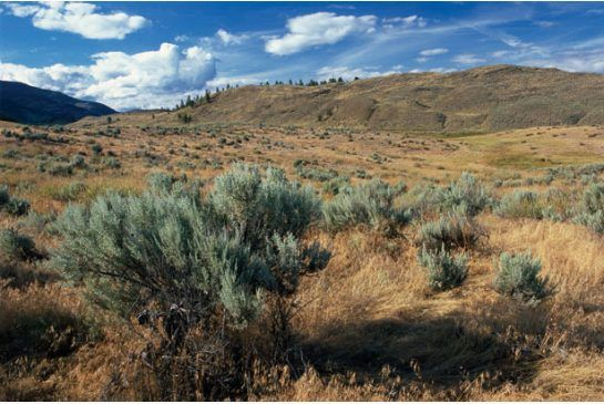 Osoyoos is the only desert in Canada and is home to 100 rare plants, such as varieties of cactus, and 300 animals found nowhere else in Canada.