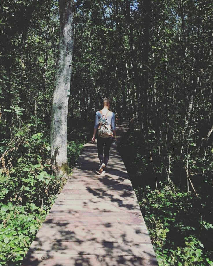 Old forest at Biogradska gora