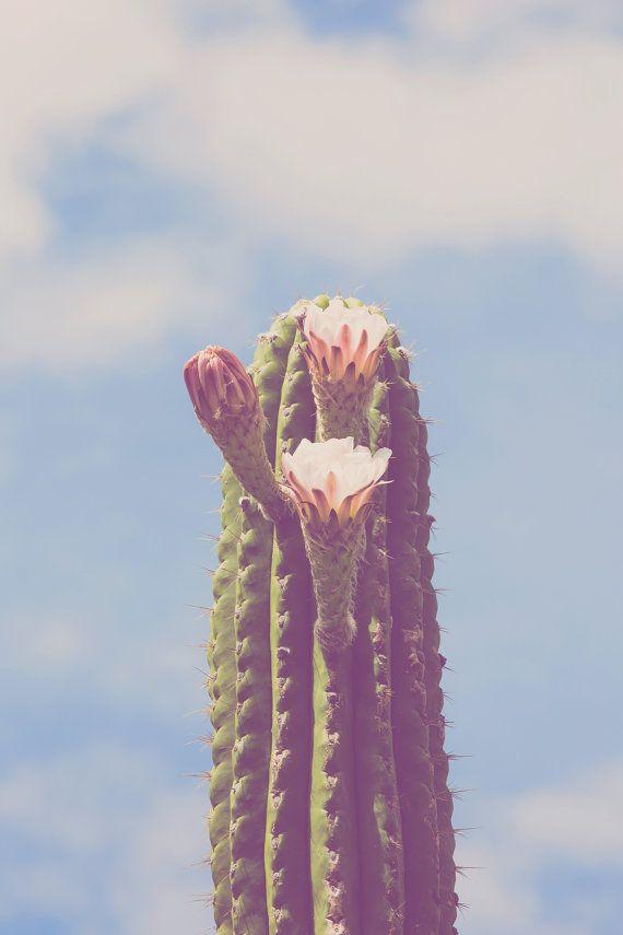 cactus photography saguaro cactus southwestern by DreameryPhoto