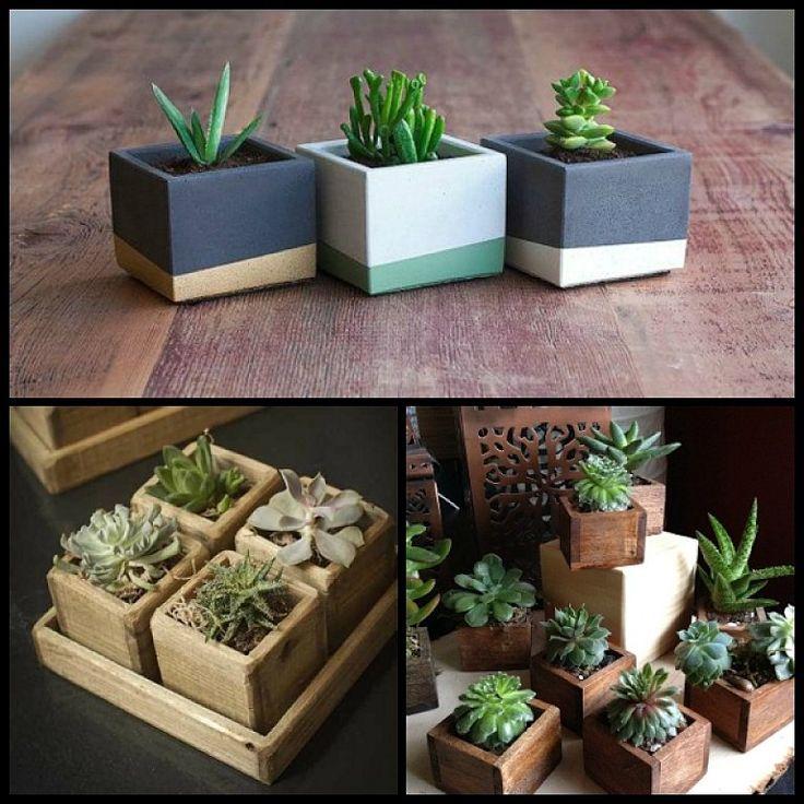 Cómo decorar con plantas suculentas | Cuidar de tus plantas es facilisimo.com