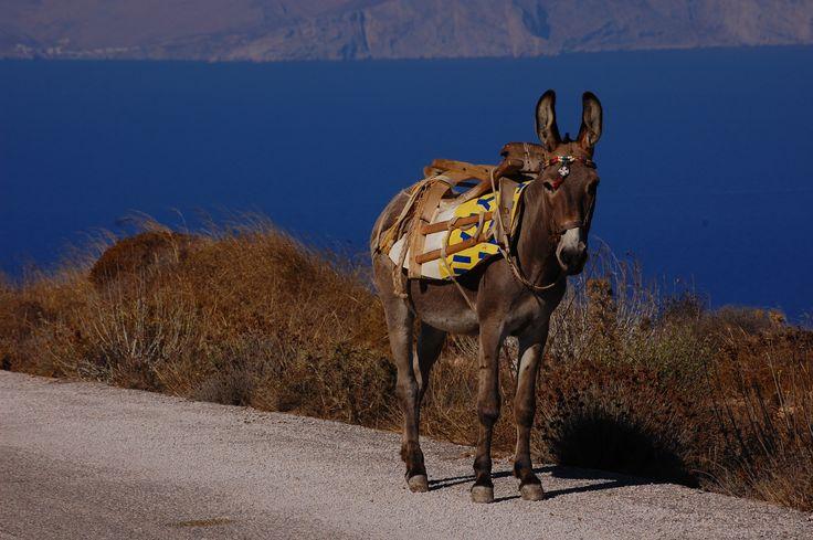 Isole Greche - Sikinos una meta low cost e incantevole