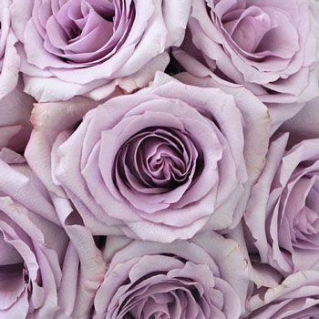 FiftyFlowers.com - Ocean Song Lavender Rose