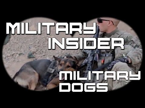 Family of fallen Marine Staff Sgt. Christopher Diaz adopts his military working dog Dino - YouTube
