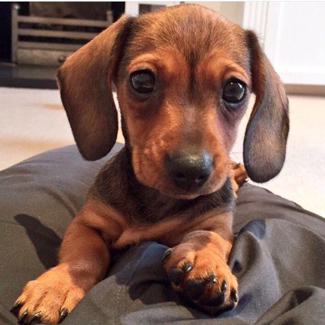 Martha. Baby dog of Tanya and Jim