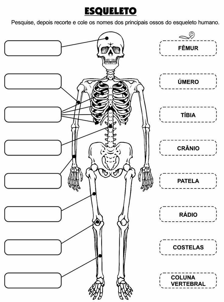 Osteologia. Alguns ossos do corpo humano para colorir e completar.