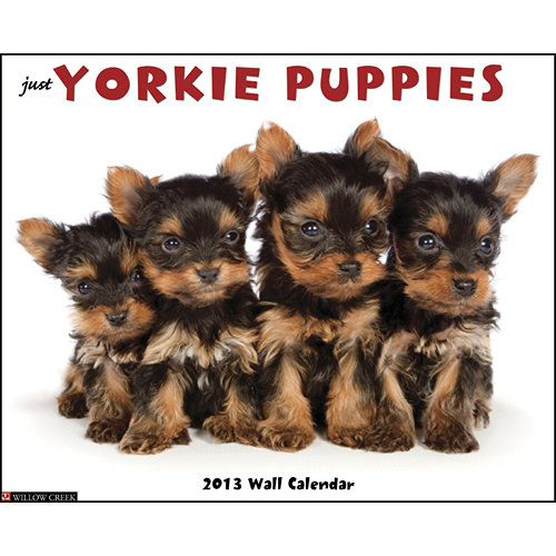 Just Yorkie Puppies Wall Calendar: Yorkshire Terrier puppies are the essence of adorable innocence.