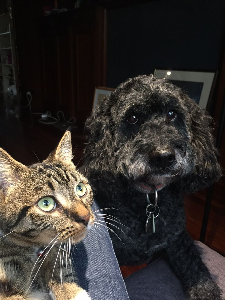 Lui & Buzzy