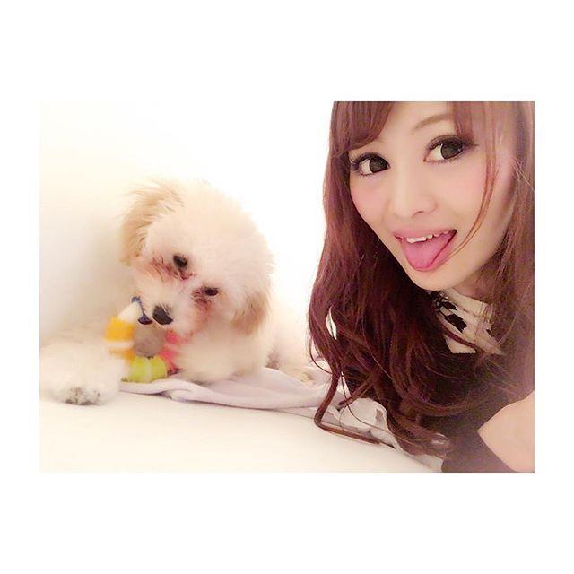 ゚・✿ヾ╲(。◕‿◕。)╱✿・゚:✲: #トイプードル #生後5ヶ月 #らぶらぶ #アプリコット #ふわもこ #愛犬 #クレア #犬との暮らし #わんこ #タイニーサイズ #toypoodle #tinypoodle #dogstagram #love #cute #dog #angel #doglife #followme #puppy #remi #バーミリオン #五反田 #キャバ嬢 #VERMILLION #girl #japan