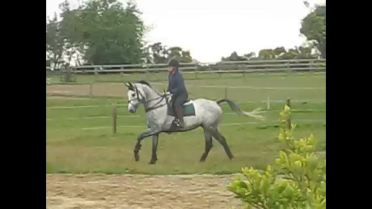 Outfoxed,sourced in Westmeath. Went on to win and place several times last season eventing in Ireland.