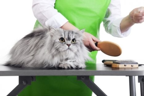 Do you share your home with a long haired cat? Keep him looking and feeling good with these grooming tips! http://moderncat.com/blogs/moderncat/long-haired-cat-grooming-tips