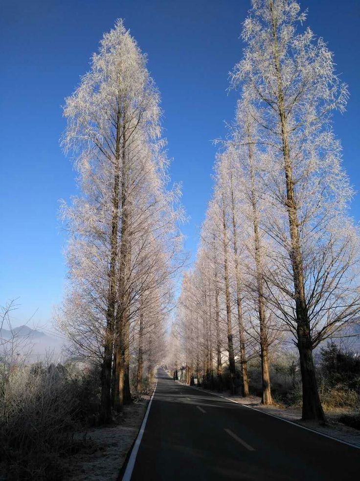Winter contryside road in East China