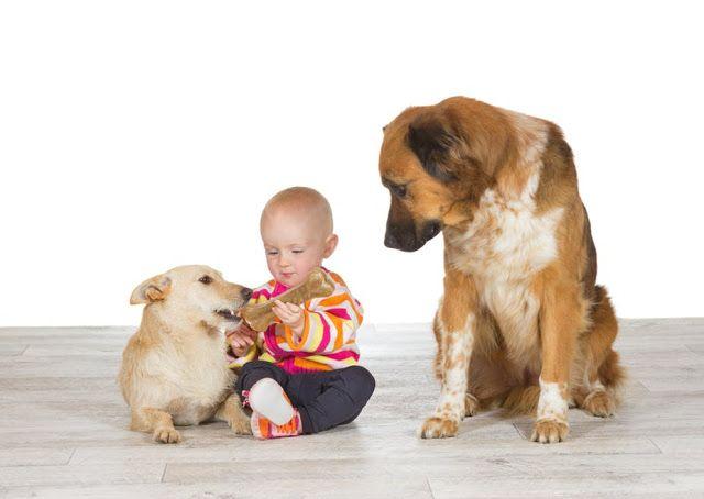 Pet Sitting: Πώς αισθάνεται πραγματικά ο σκύλος σου