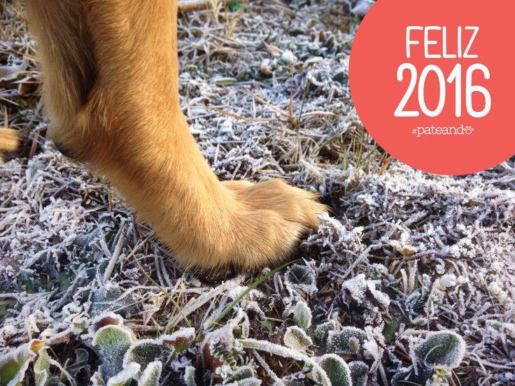 Este año lo empezamos con muy buena pata y con muchos retos. Muy feliz 2016!!!
