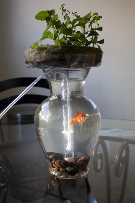 87 best images about aquaponics on pinterest gardens for Hydroponic fish tank