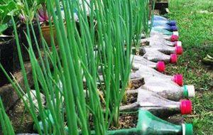 Info 3 : Pertanian Organik