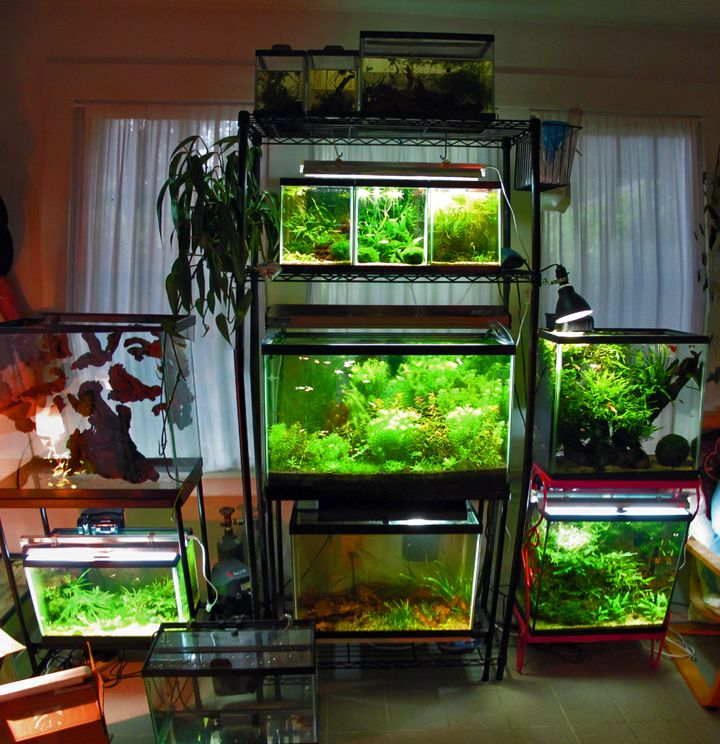 20 best fish racks stands images on pinterest for Fish tank rack
