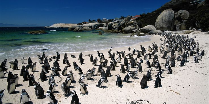 Boulders Beach penguin colony, Simon's Town