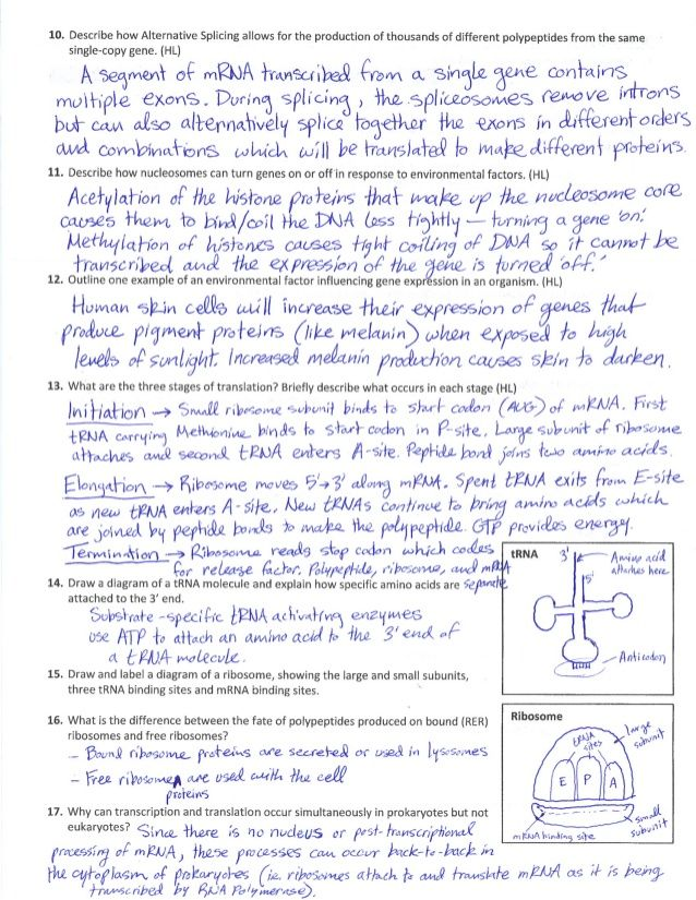 Pin On Bio Protein synthesis review worksheet answers