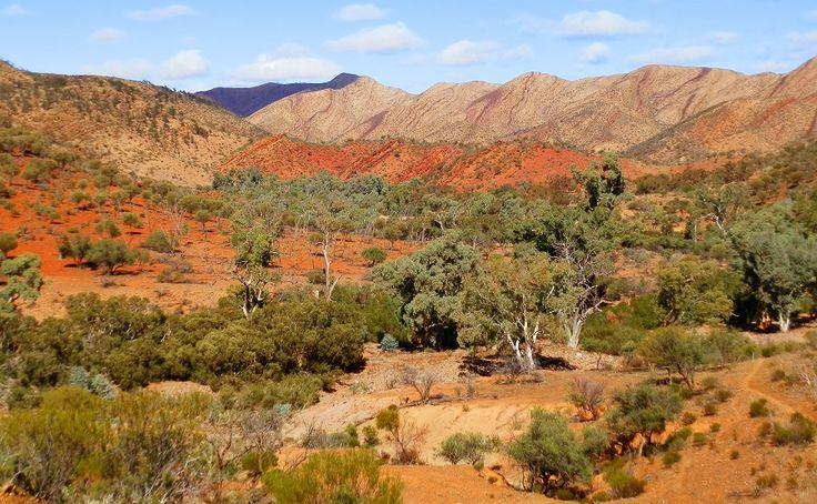 Wild Wilkawillina Gorge - Flinders Ranges National Park, South Australia!