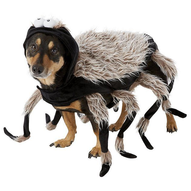 Buy Frisco Tarantula Spider Dog Cat Costume Large At Chewy Com Free Shipping And The Best Customer Service Disfraces Para Perros Perros Disfraces