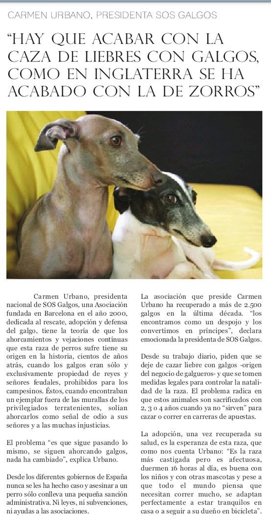 Entrevista a Carmen Urbano, presidenta de SOS Galgos, en la revista Plácet, que os podéis descargar en pdf a través de este enlace http://www.revistaplacet.com/pdf.html . No os lo perdáis por favor, ¡NO a la caza! #greyhound #ponungalgoentuvida