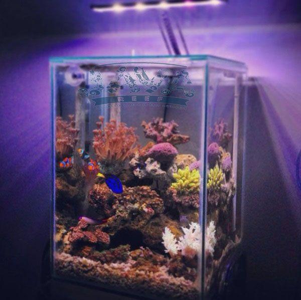 aquarium air laut ukuran kecil bisa jadi pilihan untuk di rumah
