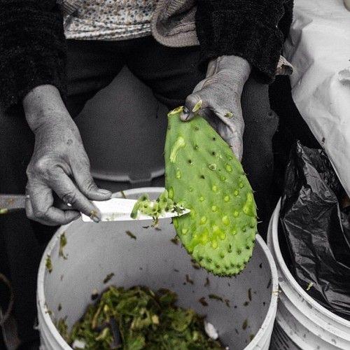 #MahCualliOhtli desea #quetevayabien , consume #nopal , #LoQueAmoDeMéxico