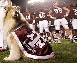 Texas A Mascot Reveille VIII. (AP)