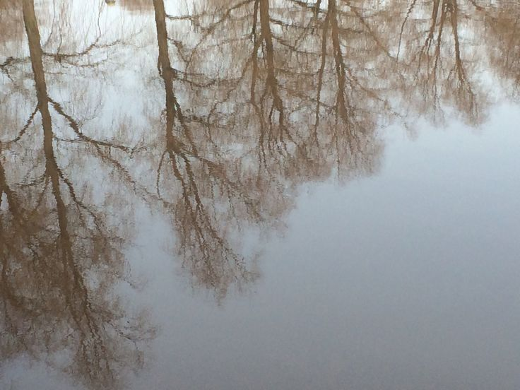 Reflection on the surface of a lake